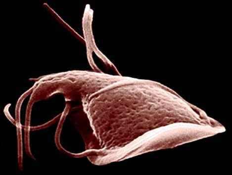 паразиты обитающие в прямой кишке человека фото